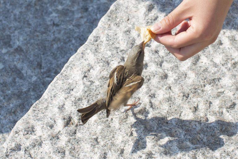 Mating av småfugl på Fløyen